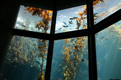 Aquarium Glass