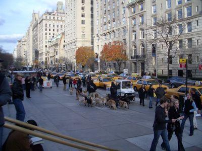 Upper East Side Dog Walker