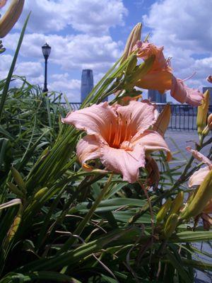 West Side Walk Flower