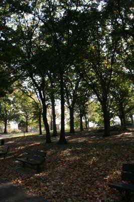 Leaves in Queens Park